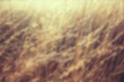 grass-835270_1920.jpg