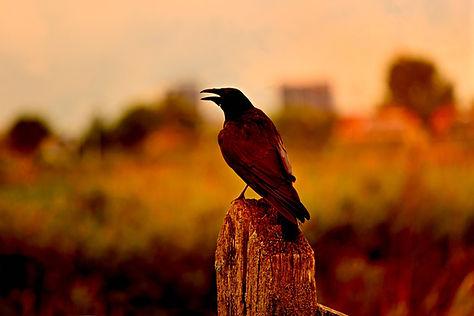 crow-3604685_1920.jpg