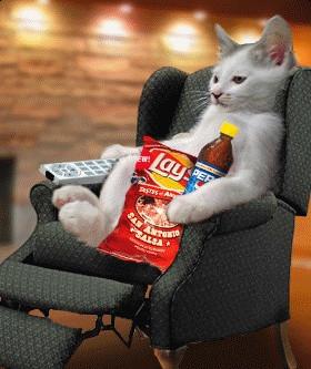 cat reader.jpg