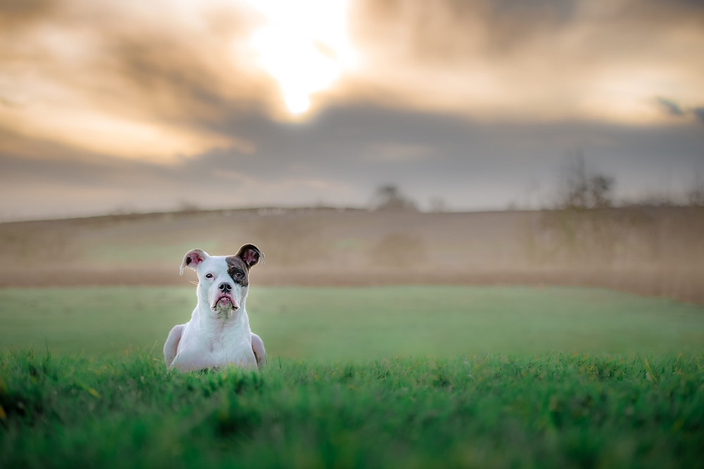 Read on why I chose dog photography as my career