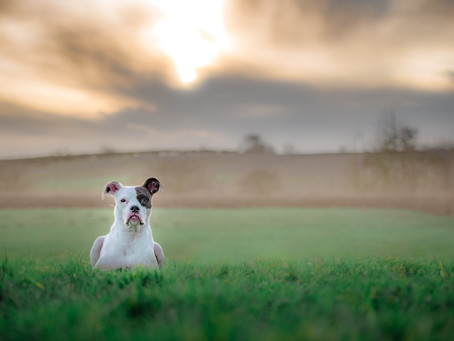 Why did I choose dog photography as a career...