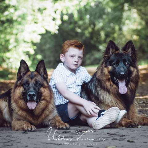 GSD's with Boy