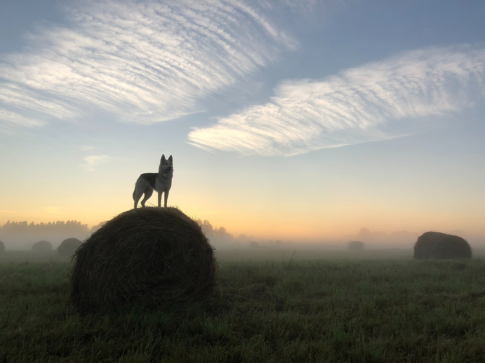 Dog outside on a haybail in the sunrise. Dog photography outdoors