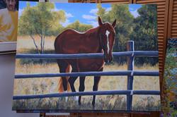'Aussie' portrait