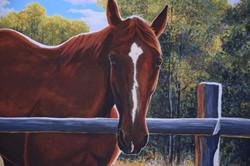 Aussie Portrait, detail