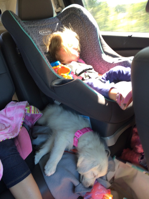 Snoozing on the drive