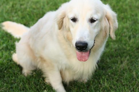 A calm, wonderful dog!
