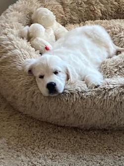 Pearl, 10 weeks old