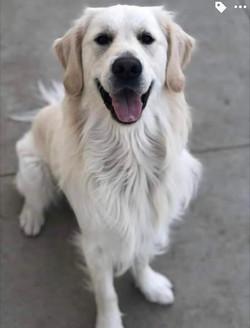 Oakley, 2 years old