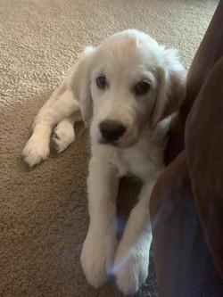 Macy Mae, 12 weeks old