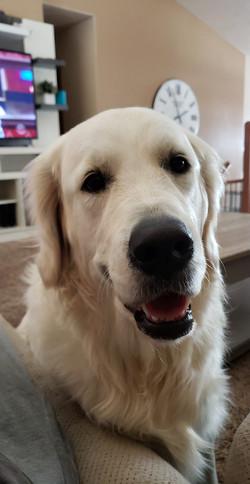 Jax, 3 years old