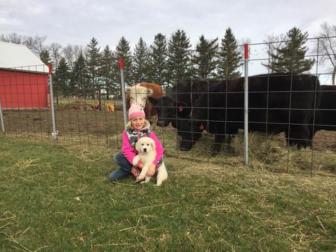 Morgan, Max & the cows