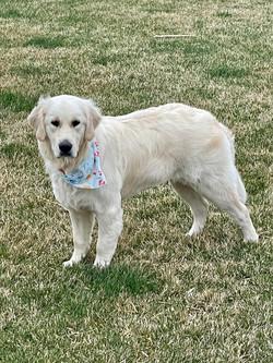 Iris, 1 year old