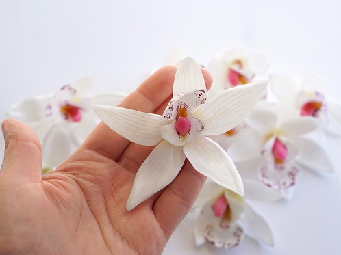 Orchid Small White 10x