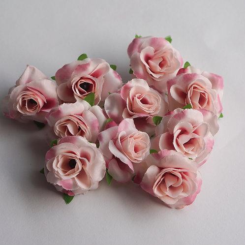 Powder Roses 10x