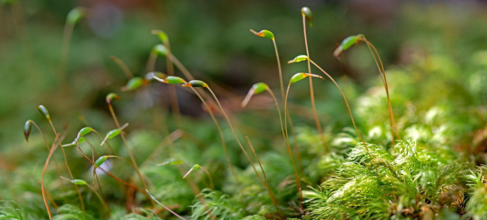 The Garden of Eden, macro moss