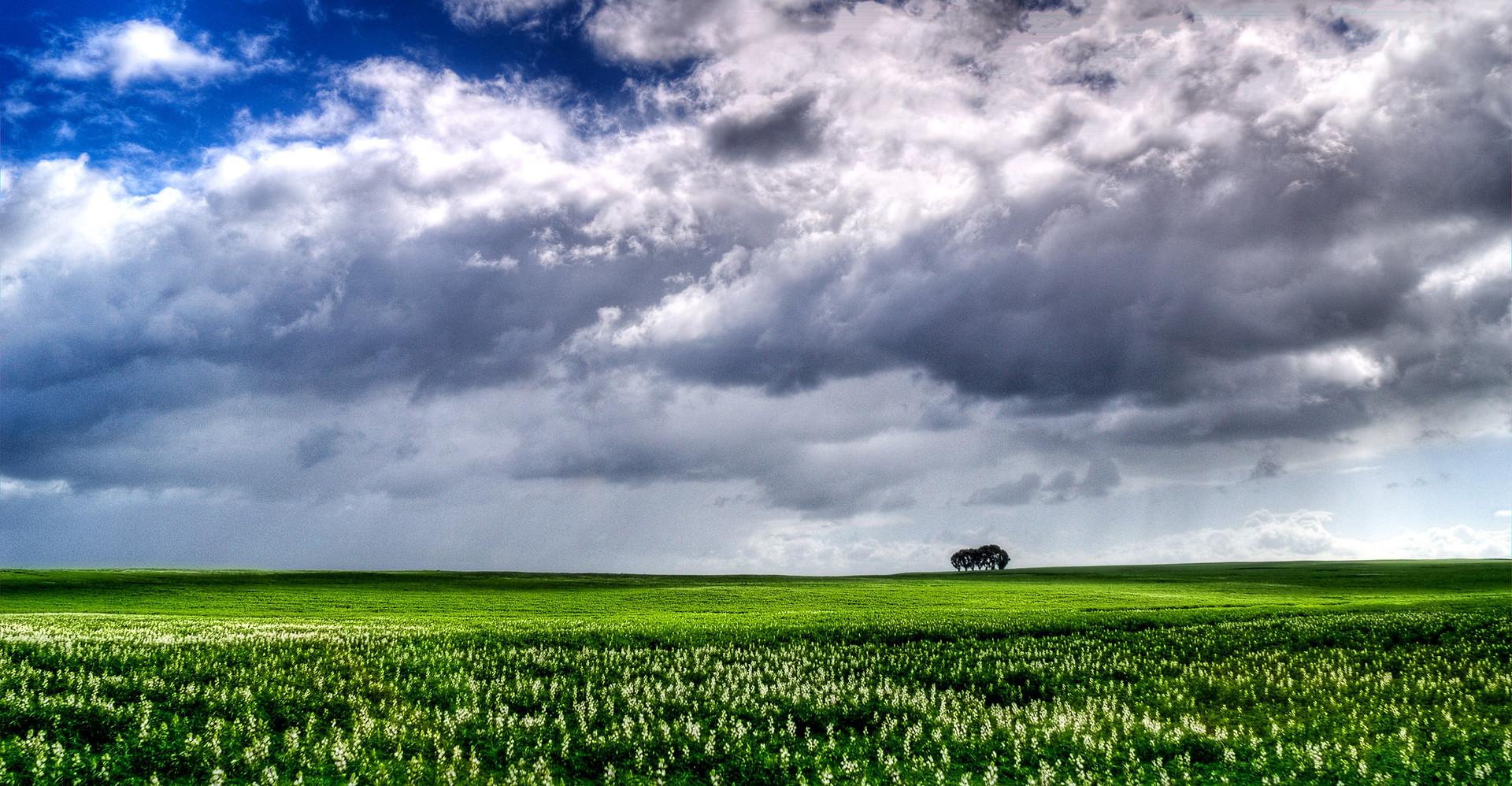 Canola fields, Western Cape