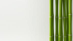 Sustainability & Moso Bamboo