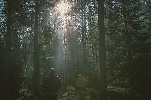 Forest Walk.jpeg