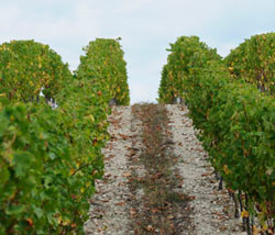 Decanter writes about pesticides in wines