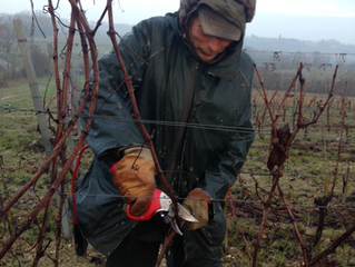 Pruning our vines