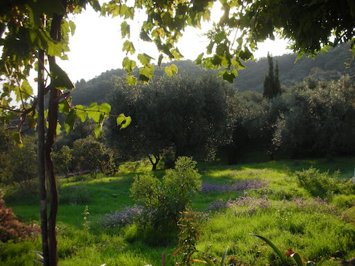 View of garden from klimateria