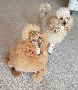 Beau and Libby.jpg