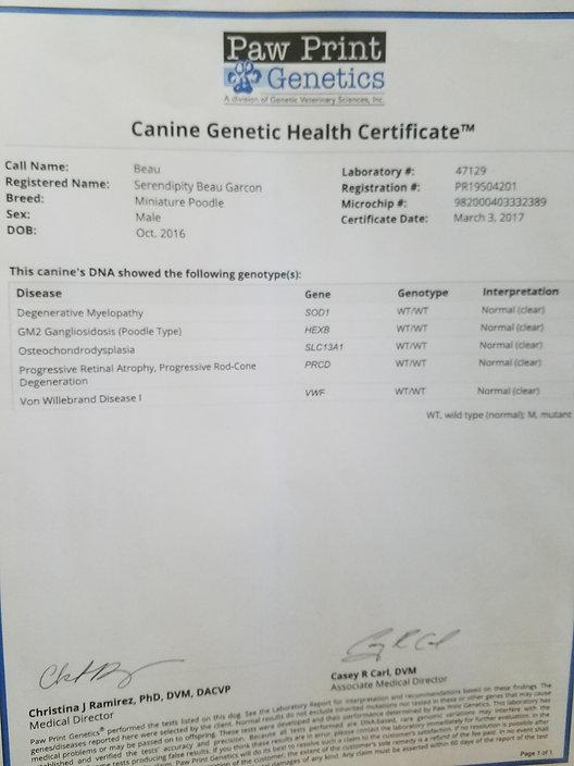 Beau's Genetic Health Certificate.jpg