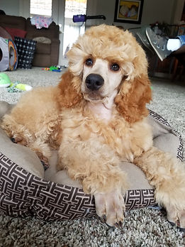 Lexie 8 weeks