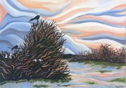 Frigate bird Sanctuary.
