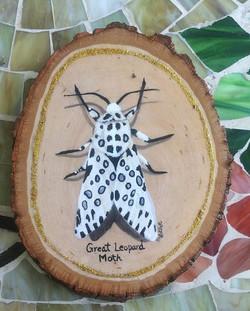Great Leopard Moth