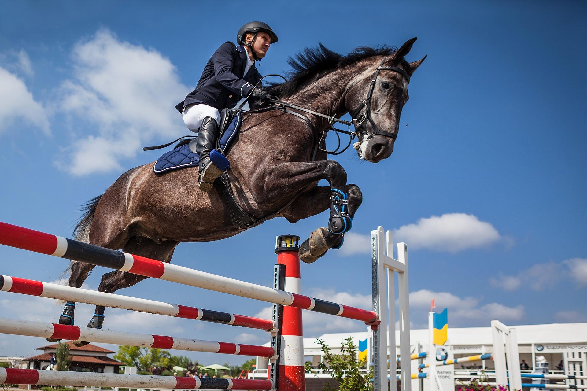horse-2944967_1920