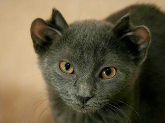 Adotei um gatinho, e agora?