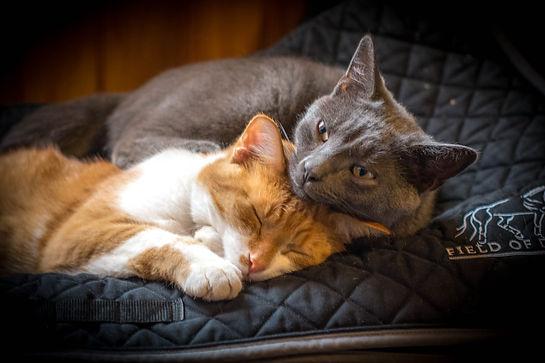 Misc - Cats.jpg