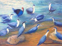 Company of Birds