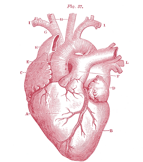 Heart%20beat_edited.png