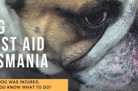 Dog First Aid Workshops