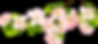 92-920295_spring-transparent-background-