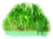 capillaire des murailles sierra de guara