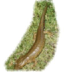 euprocpte des pyrenees sierra de guara
