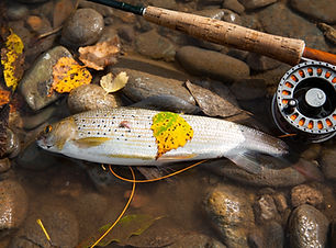 vecteezy_fly-fishing-fishing-rod-and-fis