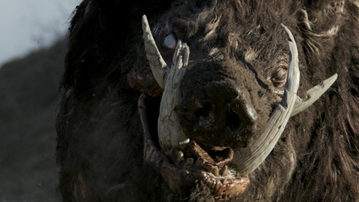 Shudder Spring 2019 Original and Exclusives Boar