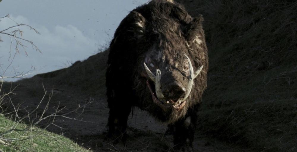 Boar Shudder June 2019
