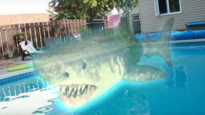 [Trailer] Wild Eye Releasing Conjures A Man-Eating 'Ouija Shark' This May