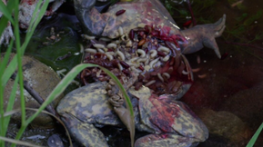 Beware Mutant Frogs, Horror-Thriller 'Strange Nature' Is In Theaters Today