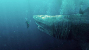 'Kill List' Director Ben Wheatley to Helm 'The Meg 2' for Warner Bros.