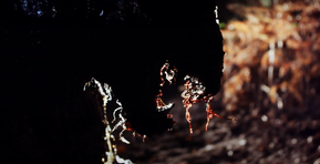 [Trailer] 'A Dark Path' Leads to Gruesome Deaths in Upcoming Creature Feature