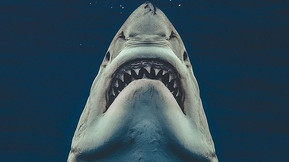 Cage Diver Takes Photo Of A Real Shark Recreating The 'Jaws' Poster!