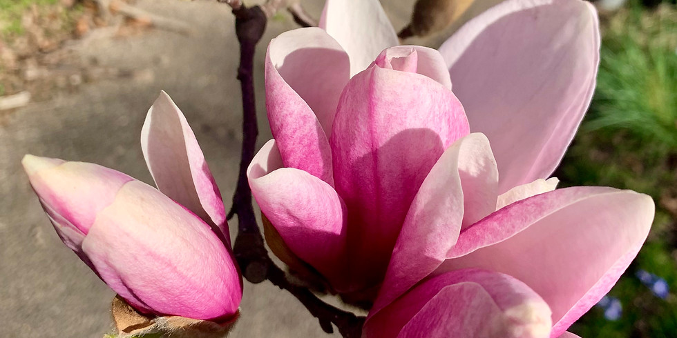 Blooming Into Spring ~ Yin Yoga & Restorative Workshop