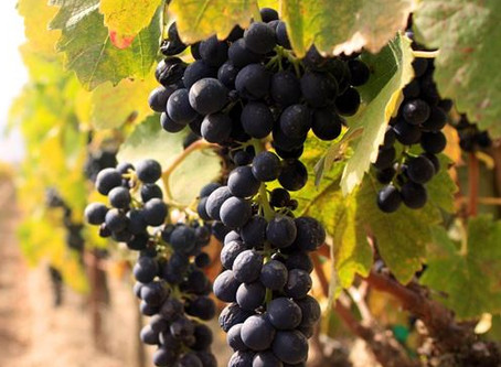 The Wines of the Veneto Region: the old viticulture traditions
